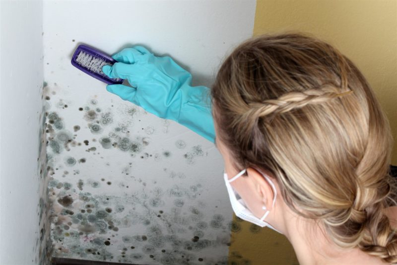 woman cleaning up black mold on wall
